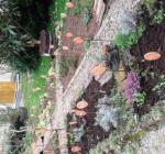 Erste Arbeiten im Klostergarten Maria Schmolln 04-2016-05