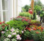 Pflanzenmarkt Klostergarten Maria Schmolln 05-2016-01
