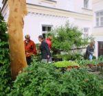 Pflanzenmarkt Klostergarten Maria Schmolln 05-2016-03
