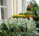 Pflanzenmarkt Klostergarten Maria Schmolln 05-2016-08