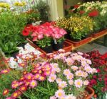 Pflanzenmarkt Klostergarten Maria Schmolln 05-2016-11