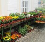 Pflanzenmarkt Klostergarten Maria Schmolln 05-2016-13