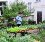 Pflanzenmarkt Klostergarten Maria Schmolln 05-2016-14