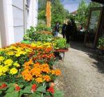 Pflanzenmarkt Klostergarten Maria Schmolln 05-2016-27